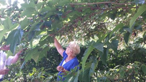 Themamiddag 29 juni tuinen in het Heuvelland