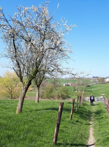 Wandeling 5 april 2019 Walem-Valkenburg