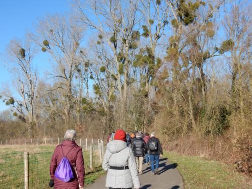 Loempia wandeling 7 februari 2020